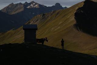 L'homme qui murmurait aux oreilles du cheval qui murmurait à la montagne