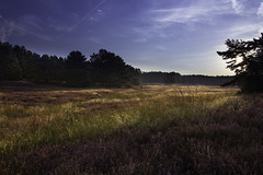 summer morning ([-ChristiaN-]) Tags: summer morning heide sky himmel morgen heather nature cycling cyclist radfahrer radfahren sommer tokina 1116 atx116pro landscape light beautiful forest violet blue heath