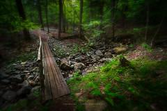Enchanted forest (Timur Dzhambinov) Tags: pentax k1 dfa 1530 adirondacks hike outdoors bridge forest woods foliage ngc
