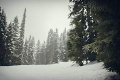 that feeling (Joshi Anand) Tags: anand joshi anandjoshi india pune portland oregon mounthood snowshooing wandering nature raw wild dof bokeh wideangle wide snow snowfall pacificnorthwest cloudy snowy gloomy lowlight