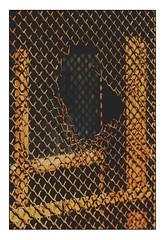 a hole is in da fence (Armin Fuchs) Tags: arminfuchs fence niftyfifty hole