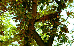 The beer tree (portalealba) Tags: zaragoza zaragozaparque portalealba canon eos1300d