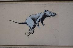 Champagne (HBA_JIJO) Tags: streetart urban pochoir stencil paris animal art france hbajijo peinture spray urbain banksy rat painbting champagne wall mur