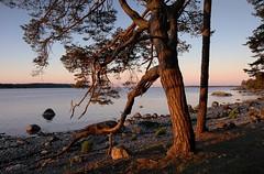 20180528-002F (m-klueber.de) Tags: 20180528002f 20180528 2018 mkbildkatalog nordeuropa skandinavien scandinavia schweden sweden sverige södermanland sörmland schärenküste skärgård ostsee nynäshamn morgen