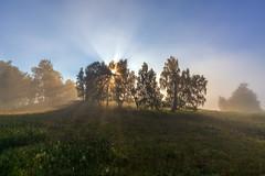 Уральские зори #своифото, #пейзаж, #природа, #утро, #рассвет, #дерево, #натура, #восход, #sunrise, #nature, #tree, #Landscape, #sun, #туман, #лучи, #foggy, #природа, #небо, #небоголубое, #сониальфа, #сониа6000, #sonyalpha, #sonya6000, #natgeoru, #natgeoru (ЛеонидМаксименко) Tags: natgeorussia сониа6000 сониальфа пейзаж восход sonyalpha небоголубое утро sonya6000 лучи natgeoru foggy tree nature небо landscape природа натура дерево sun natgeoyourshot рассвет своифото туман sunrise