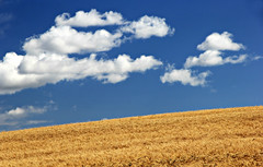 Blue sky day (Across & Down) Tags: sky clouds blue prairies field agriculture autumn harvest manitoba