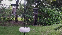 Just for fun. (Glotzsee) Tags: squirrel squirrels birdfeeder fun antics perseverance persevere funny comical backyard
