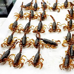 2018-08-26_1854848571838628914 (ky_olsen) Tags: cdmx mexicocity mexico mercado marketplacetour marketplace eatingscorpions scorpions exoticfood mercadodesanjuan
