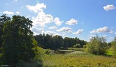 LANDSCAPE (JaapCom) Tags: jaapcom landscape landschaft clouds water trees dutchnetherlands holland wapenveld