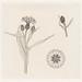 Cornflowers color sketch by Julie de Graag (1877-1924). Original from the Rijks Museum. Digitally enhanced by rawpixel.