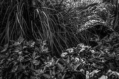 Summer bliss monochrome (Perfectam Artem Photography) Tags: photo photograph photography flower flowers park garden monochrome bw summer
