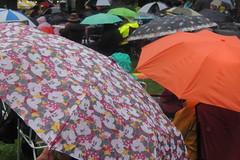 umbrellas 6 c