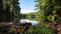 Beaver Dam - Algonquin - Canada (Dazarazmataz) Tags: beaver dam pond lake water reflection woodland forest landscape nature naturephotography wild travel trees trip nikon d7200 wideangle sigma 1020 canada ontario algonquin