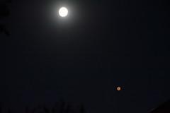 The Moon and Mars (ctberney) Tags: moon mars night sky planet red surprise wonder awe grabbedmycamera andmytripod struggledtogetadecentshot frustrating ineedtolearnmoreaboutphotography andamosquitobitmyankle astronomy