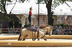 2018.06.21.059 HARAS du PIN - Voltige traditionnelle de cirque (alainmichot93 (Bonjour à tous - Hello everyone)) Tags: 2018 france frankreich francia frankrijk frança γαλλία франция normandie orne pinauharas harasdupin haras animal mammifère équidé cheval horse pferd caballo cavallo cavalo paard άλογο лошадь nikon nikond5100 voltige