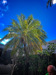 Bald Palm (LarryJay99 ) Tags: iphone7plus iphone7 man men guy guys dude male studly manly dudes handsome blue blueskys palmtree baldheaded nature natural pate sexy