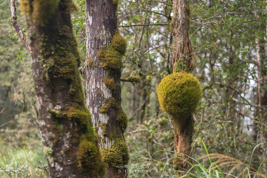 太平山翠峰湖環山步道 |走在泥濘的道路上,只為途中美景 | 宜蘭大同鄉21