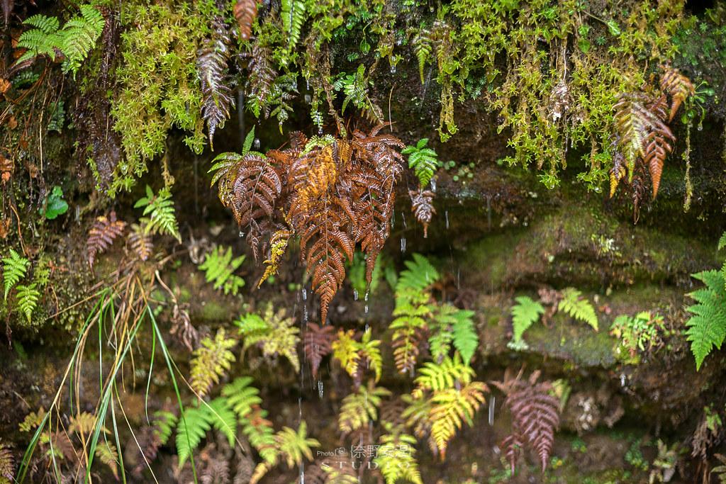 太平山翠峰湖環山步道 |走在泥濘的道路上,只為途中美景 | 宜蘭大同鄉16