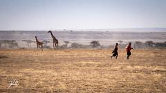 2 X 2 (donte.hunter85) Tags: tanzania safari africa nature adventure lumixg9 lumix panasonic