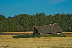 Alberta Strong (juadel) Tags: abandone alberta canada field grass wood sky forest tree