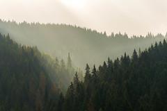 Chochołowska (Piku91) Tags: poland polska moutain tatra moutains tatry tree wood