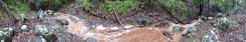 starr-180827-0539-Eucalyptus_sp-panoram_panoram_flood_in_intermittent_stream-Hawea_Pl_Olinda-Maui