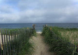 The dunegrass preservation