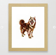 Husky Dog Watercolor Painting Framed Art Print (marianv2014) Tags: husky huskies dogs watercolour animal pet pets dog watercolor brown aquarelle fineart walldecor animals animalart northerndogs siberiandog winter siberianhusky blueeyes happyface fur tale splashes splatters dogbreeds siberia squareformat huskypainting huskyposter huskydecor dogwallart moderndecor artgifts affordableart illustration artwork art beautiful whitebackground contemporary single decor cute zoology