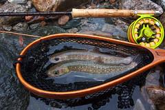 DSC_4594 (touhenboku) Tags: fly fishing flyfishing iwana イワナ