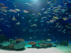 Aquarium (kimtosh11) Tags: japan tokyo xperia ikebukuro sunshineaquarium aquarium fish 東京 水族館 サンシャイン水族館 池袋