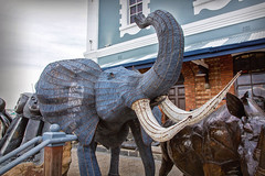 Wired Pachaderm_3616 (hkoons) Tags: capetown southafrica southernafrica africa elephant harbor art artican artist beast boats daylight metal outside pachyderm photo