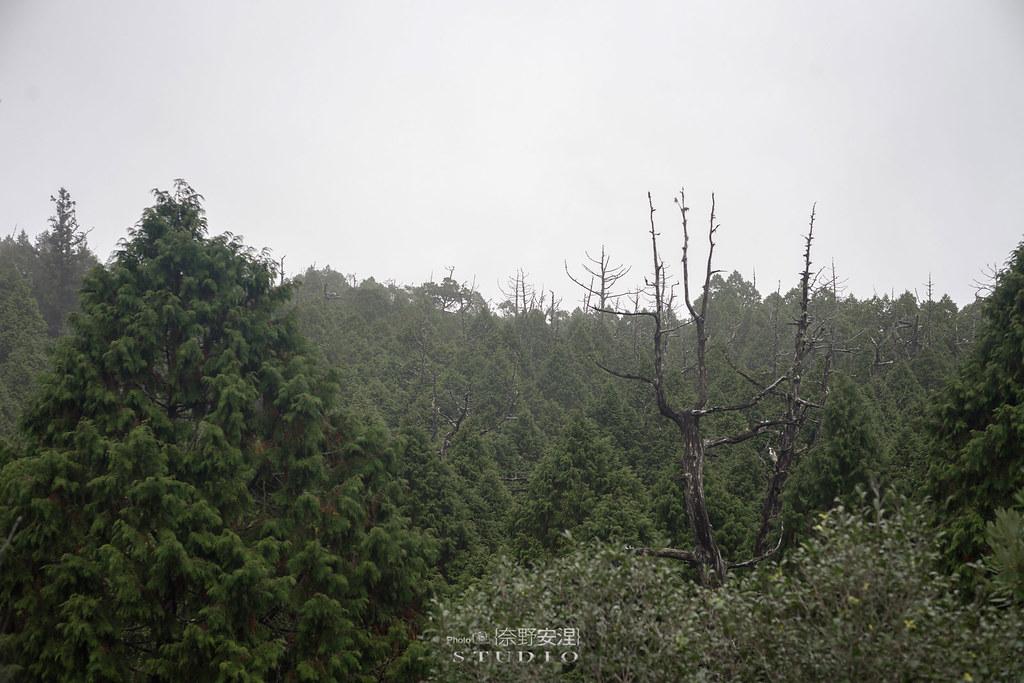 太平山翠峰湖環山步道 |走在泥濘的道路上,只為途中美景 | 宜蘭大同鄉38