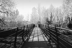 Bridge over the river Weaver (joshdgeorge7) Tags: nantwich film blackandwhite cheshire weaver pentax mx 24mm smc asahi japan fp4 ilford contrast winter