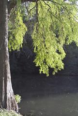 Farben des Spätsommers (borntobewild1946) Tags: spätsommerfarben farbenrausch blätter bäume äste zweige mönchengladbachvolksgarten moenchengladbach nrw nordrheinwestfalen rheinland