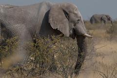 Namibie Park Etosha ( Philippe L PhotoGraphy ) Tags: afrique namibie