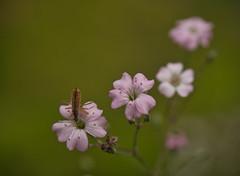 kopfueber essen (lebastian) Tags: tier plants macro panasonic dmcgx8 lumix g vario 45150f4056 raynox dcr250