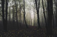ciemny-jesie-las-po-deszczu-65764369 (tanyapavlicapschyrembel) Tags:
