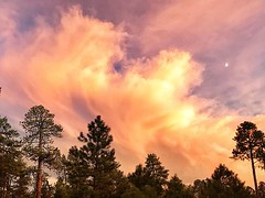Awesome cloud and sunset display over our campsite tonight just north of the Grand Canyon at Jacob Lake. #GrandCanyon #Sunset #Colors #camping #jacoblake #NorthRim #Arizona #FamilyTime #trees #clouds #ArizonaGuide (Nate Loper - #ArizonaGuide) Tags: southwest grand canyon arizona flagstaff outdoors landscape nature getoutside travel scenic royalty free to use seetheworld photography editorial sky clouds park geology desert adventure explore guidelife arizonaguide