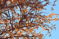 Isla Teja (ChinaTamara) Tags: valdivia chile isla teja flores flickr colores naturaleza parque