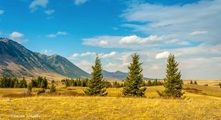 Pine trees and prairie