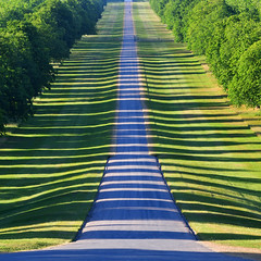 Zebra hour (Arni J.M.) Tags: path trees shadows green straight shadowplay eveningsun zebrahour thelongwalk windsor england uk