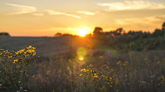 Evening at the end of summer (JamesPatrick.pro) Tags: outdoor wildlife nature naturr sun orange sunset evening fall flowers rurallandscape landscape farm fields park