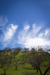 wine country (Robert Borden) Tags: green blue greenandblue hillside winecountry orchard art paso pasorobles centralcal california usa northamerica canon canonphotography canonrebel clouds landscapephotography travel
