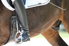 _MG_9831 (dreiwn) Tags: dressurprüfung dressurreiten dressurpferd ridingarena reitturnier reiten reitplatz reitverein reitsport ridingclub equestrian horse horseback horseriding horseshow pferdesport pferd pony pferde tamronsp70200f28divcusd dressur dressuur dressyr dressage