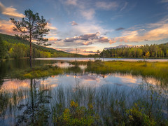 As of Now (lonekheir) Tags: water lake fall autumn tree forest sunset reflection norge norway peaceful tranquil