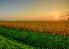 Harvest Time (kendoman26) Tags: hdr nikhdrefexpro2 soybeanfield ruralscene nikon nikond7100 tokinaatx1228prodx tokina tokina1228 grundycountyillinois