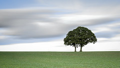 Two Trees (Nathan J Hammonds) Tags: tree trees two stand alone minimal long exposure nd filter lee filters bigstopper 10stop farm herefordshire england uk colour outdoors countryside nikon d750