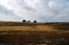 IMGP5498 (brinkmann.hannover) Tags: lüneburgerheide niederhaverbeck