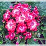 Allan Gardens Conservatory ~ Toronto Ont - Canada - Botanical Gardens thumbnail