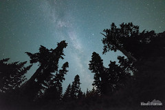 Rainier Forest Night (kevin-palmer) Tags: mountrainier nationalpark mountrainiernationalpark washington cascades mountains nikond750 august summer smoke smoky evening hazy trees forest sky night dark space astronomy astrophotography stars starry mowichlake samyang rokinon14mmf28 milkyway galaxy astrometrydotnet:id=nova2773015 astrometrydotnet:status=failed